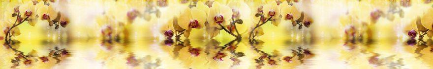 Изображение для стеклянного кухонного фартука, скинали: цветы, орхидеи, fartux1051