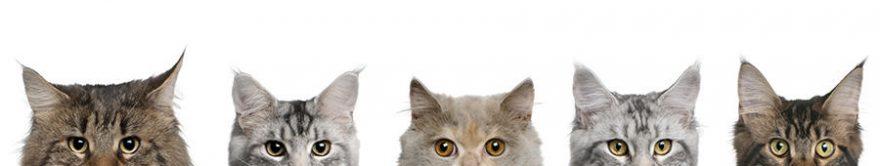 Изображение для стеклянного кухонного фартука, скинали: животные, кошки, fartux1129