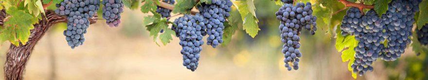 Изображение для стеклянного кухонного фартука, скинали: виноград, fartux1140