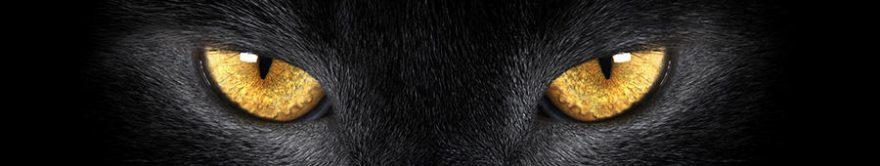 Изображение для стеклянного кухонного фартука, скинали: животные, кошки, fartux1146