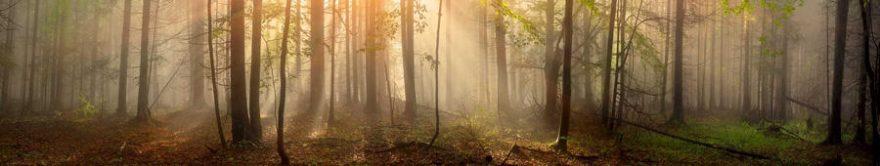 Изображение для стеклянного кухонного фартука, скинали: природа, деревья, лес, fartux1195
