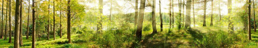Изображение для стеклянного кухонного фартука, скинали: природа, деревья, лес, fartux1209