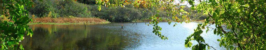 Изображение для стеклянного кухонного фартука, скинали: лес, озеро, fartux1230