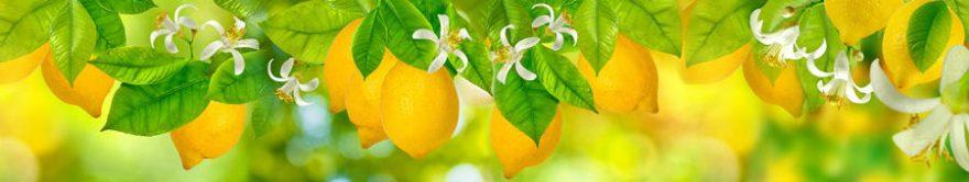 Изображение для стеклянного кухонного фартука, скинали: листья, фрукты, лимоны, fartux1239