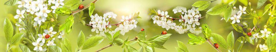 Изображение для стеклянного кухонного фартука, скинали: цветы, яблоня, божья коровка, ветки, fartux1253