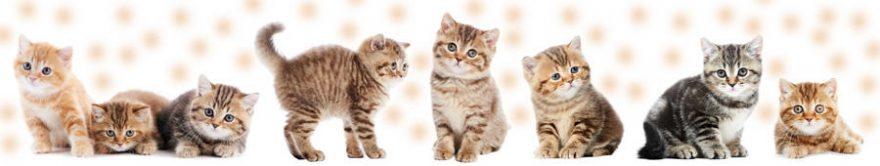 Изображение для стеклянного кухонного фартука, скинали: животные, кошки, fartux1258