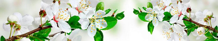 Изображение для стеклянного кухонного фартука, скинали: цветы, яблоня, ветки, fartux1281