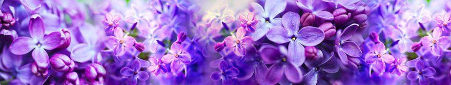 Изображение для стеклянного кухонного фартука, скинали: цветы, сирень, fartux1313