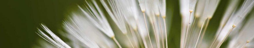 Изображение для стеклянного кухонного фартука, скинали: растение, fartux1325