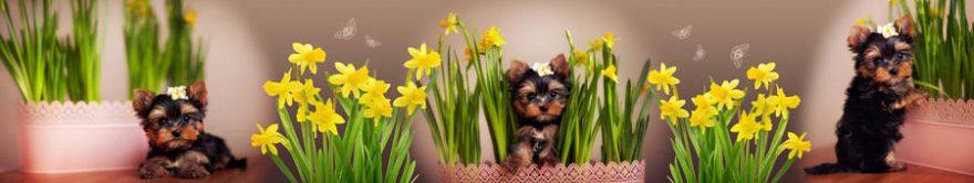 Изображение для стеклянного кухонного фартука, скинали: цветы, животные, нарциссы, собаки, fartux1341