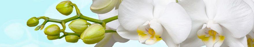 Изображение для стеклянного кухонного фартука, скинали: цветы, орхидеи, fartux1362