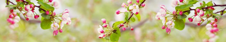 Изображение для стеклянного кухонного фартука, скинали: цветы, яблоня, ветки, fartux1372
