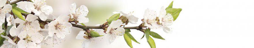 Изображение для стеклянного кухонного фартука, скинали: цветы, яблоня, ветки, fartux1384