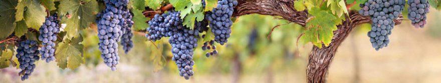 Изображение для стеклянного кухонного фартука, скинали: виноград, fartux1443