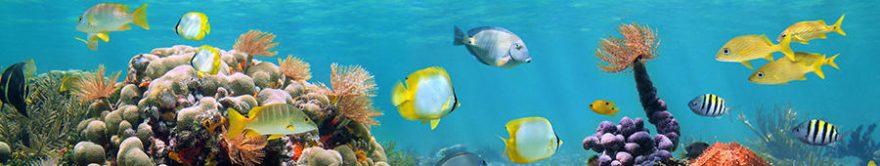 Изображение для стеклянного кухонного фартука, скинали: рыбы, подводный мир, кораллы, fartux1451