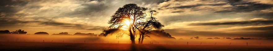 Изображение для стеклянного кухонного фартука, скинали: закат, деревья, fartux1480