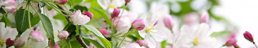 Изображение для стеклянного кухонного фартука, скинали: цветы, яблоня, fartux1485