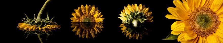 Изображение для стеклянного кухонного фартука, скинали: цветы, подсолнухи, fartux1558