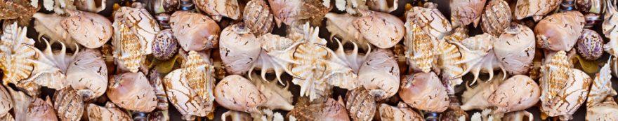 Изображение для стеклянного кухонного фартука, скинали: ракушки, fartux1568