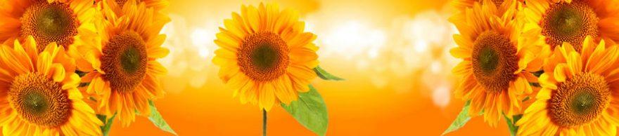 Изображение для стеклянного кухонного фартука, скинали: цветы, подсолнухи, fartux1581
