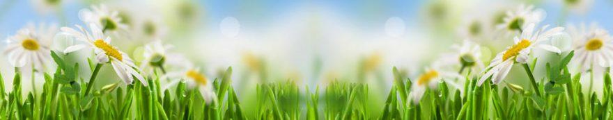 Изображение для стеклянного кухонного фартука, скинали: цветы, трава, ромашки, fartux1595