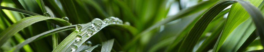 Изображение для стеклянного кухонного фартука, скинали: трава, роса, fartux1611