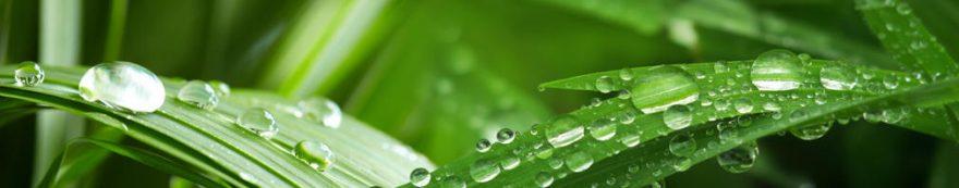 Изображение для стеклянного кухонного фартука, скинали: трава, роса, fartux1613