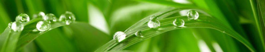 Изображение для стеклянного кухонного фартука, скинали: трава, роса, fartux1616