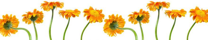 Изображение для стеклянного кухонного фартука, скинали: цветы, герберы, fartux1626