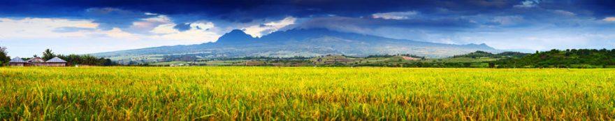 Изображение для стеклянного кухонного фартука, скинали: поле, трава, fartux1658