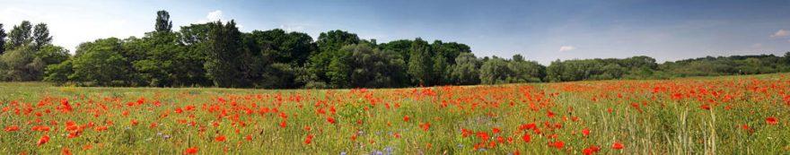 Изображение для стеклянного кухонного фартука, скинали: цветы, поле, fartux1663