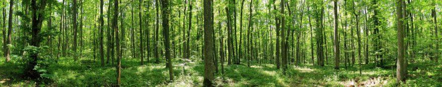 Изображение для стеклянного кухонного фартука, скинали: лес, fartux1668