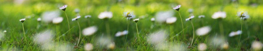Изображение для стеклянного кухонного фартука, скинали: цветы, трава, ромашки, fartux1669