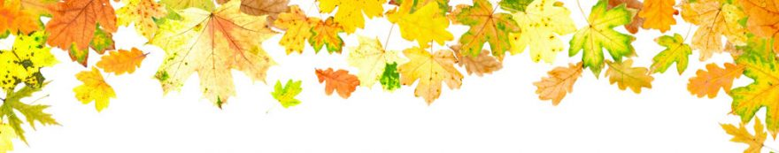 Изображение для стеклянного кухонного фартука, скинали: листья, осень, fartux1680