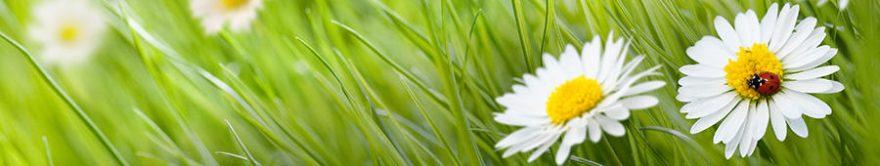 Изображение для стеклянного кухонного фартука, скинали: цветы, трава, ромашки, fartux1704