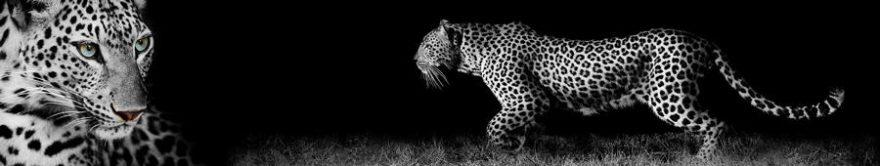 Изображение для стеклянного кухонного фартука, скинали: животные, леопард, fartux1706