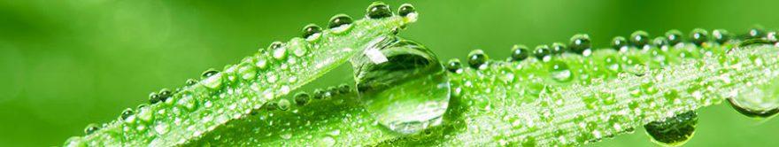 Изображение для стеклянного кухонного фартука, скинали: трава, роса, fartux1716