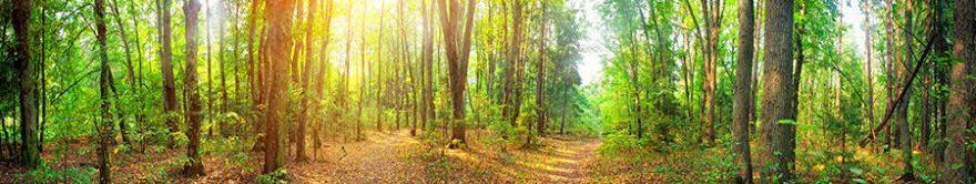 Изображение для стеклянного кухонного фартука, скинали: природа, лес, fartux1724