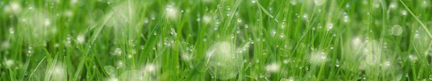 Изображение для стеклянного кухонного фартука, скинали: трава, роса, fartux1734