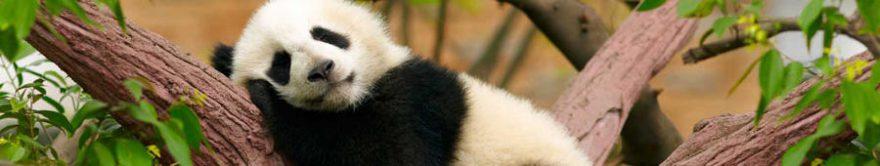 Изображение для стеклянного кухонного фартука, скинали: животные, панда, fartux1765