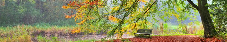 Изображение для стеклянного кухонного фартука, скинали: деревья, осень, парк, fartux1784