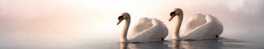 Изображение для стеклянного кухонного фартука, скинали: птицы, лебеди, fartux1798