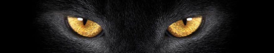 Изображение для стеклянного кухонного фартука, скинали: кошки, fartux532