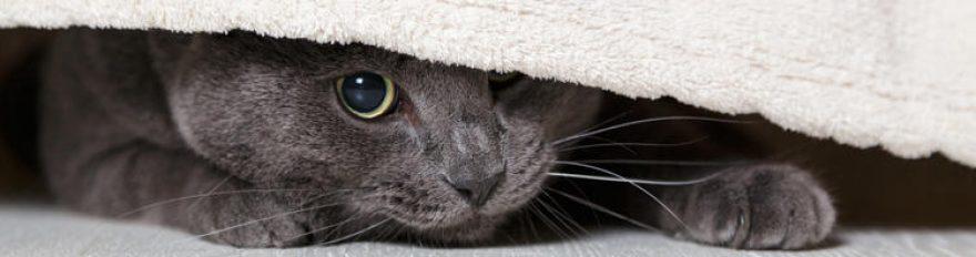 Изображение для стеклянного кухонного фартука, скинали: животные, кошки, fartux538