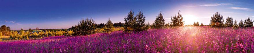 Изображение для стеклянного кухонного фартука, скинали: цветы, поле, природа, fartux610