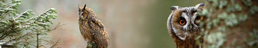 Изображение для стеклянного кухонного фартука, скинали: птицы, сова, fartux636