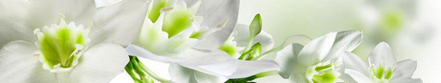 Изображение для стеклянного кухонного фартука, скинали: цветы, нарциссы, fartux709
