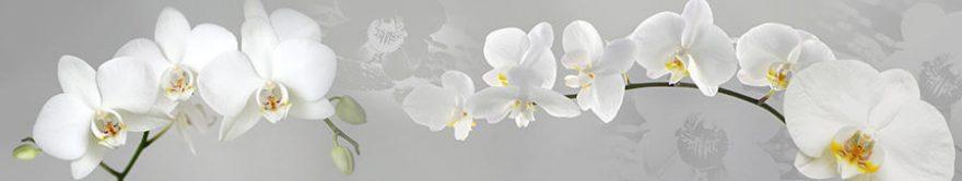 Изображение для стеклянного кухонного фартука, скинали: цветы, орхидеи, fartux758