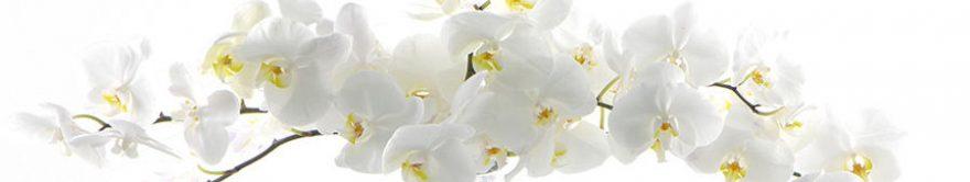Изображение для стеклянного кухонного фартука, скинали: цветы, орхидеи, fartux794