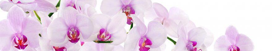 Изображение для стеклянного кухонного фартука, скинали: цветы, орхидеи, fartux800